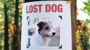 GTY_lost_pet_poster_137068117_jt_131103_16x9_608